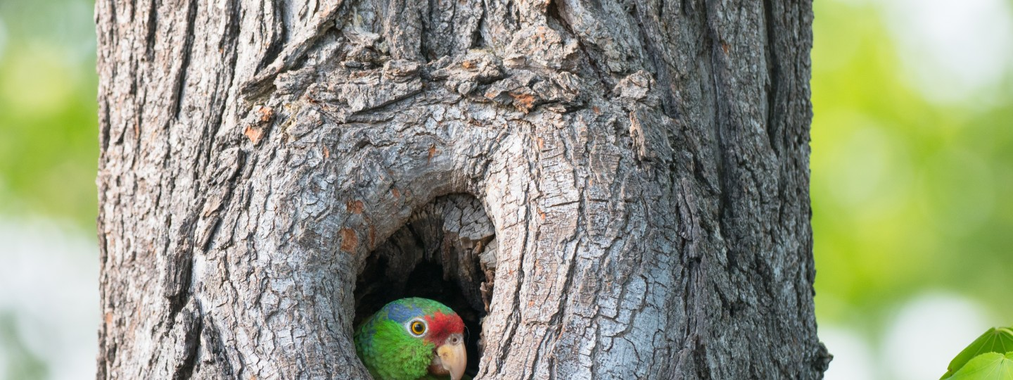 A wild parrot with green, blue, and red plumage perches on a branch