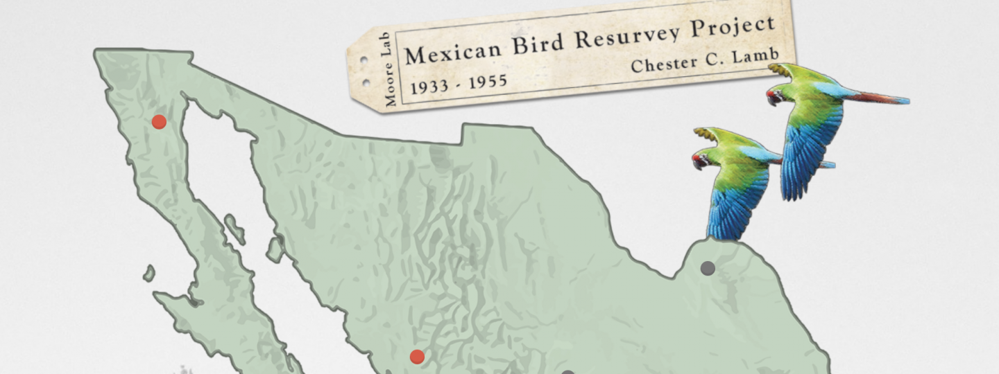 Two macaws flying over a map of Mexico