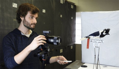 Researcher Josh Medina takes a photo of a bird specimen to create a 3D model