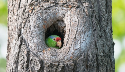 parrot in a tree hole